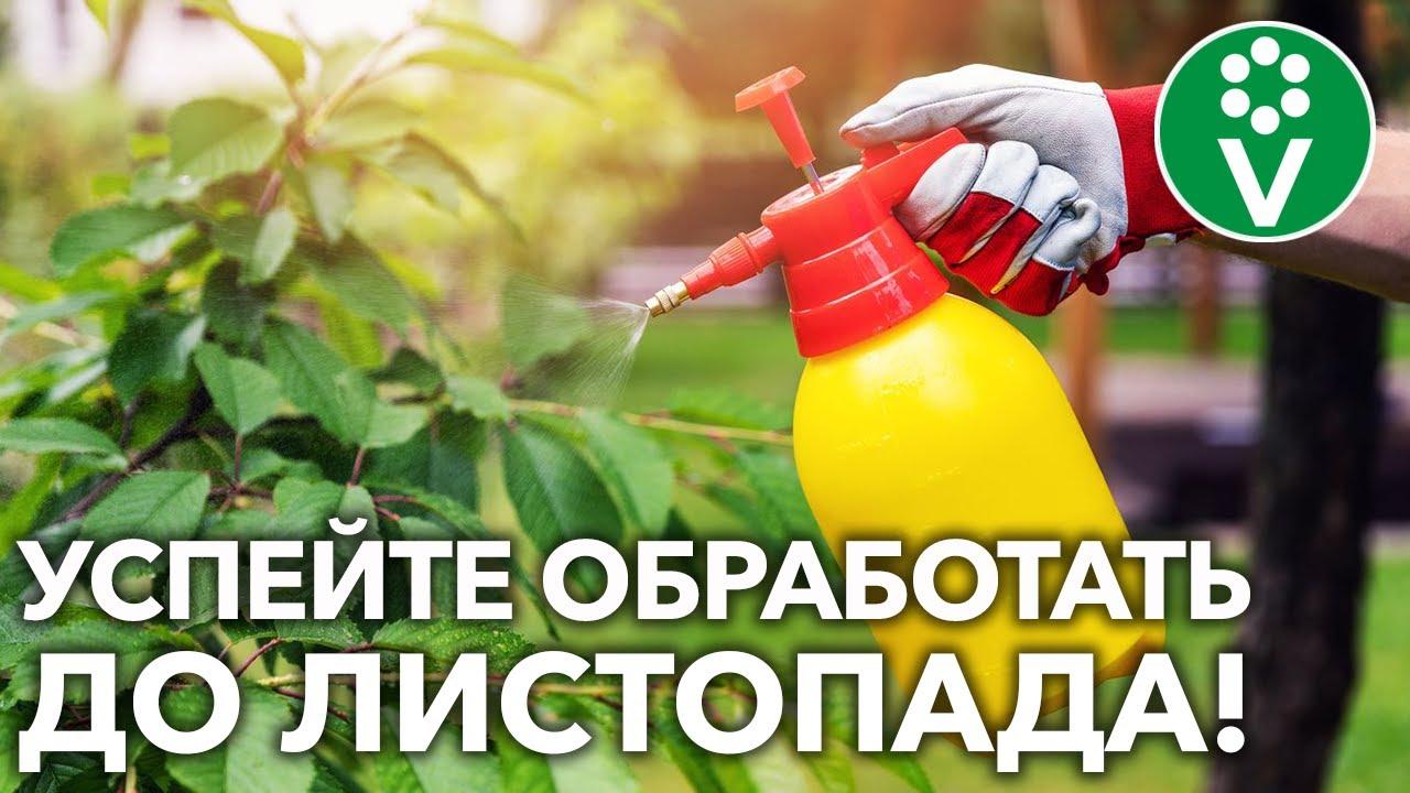 Защитите сад осенью от всех болезней! Искореняющая обработка в ТРИ этапа!