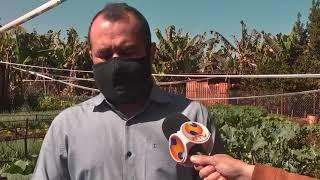 A friagem mais intensa afeta também as lavouras. Na região de Patos de Minas, agricultores que trabalham com hortaliças contabilizam os prejuízos