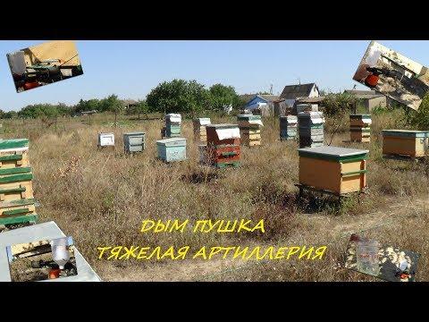 Пчела чистит печатный расплод в гнезде