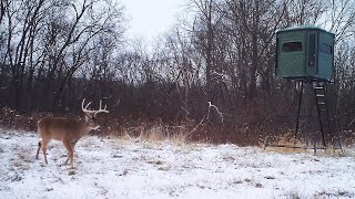 The Do's and Don'ts of Feeding Deer Over Winter