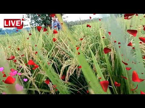 Shahidul Nannar new video