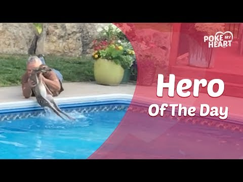 Man Rescues Baby Deer From Drowning in Swimming Pool