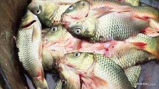【伍阿哥】農田抓的稻花魚,用古老的方式做成美味,放1年時間都不會壞
