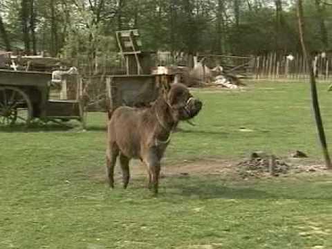 seksi magarca plesni porno