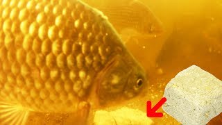 Халва как прикормка для рыбы