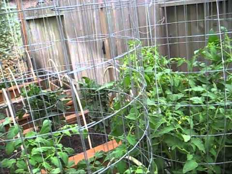 , title : 'High Yield Tomato Plants: 50-80 lbs per Plant