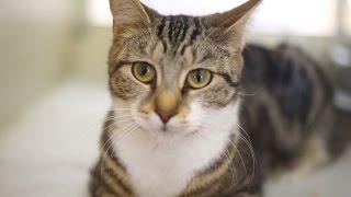 RSPCA York: Cats