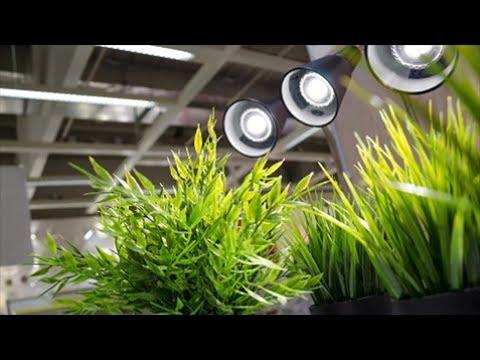 Какое освещение на самом деле нужно комнатным растениям?