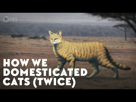 How Humans Helped Cats Take Over the World