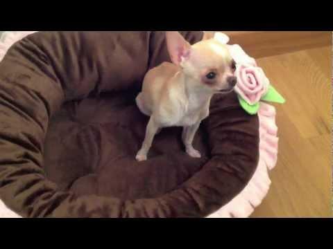camas para perros, camas de lujo para perros