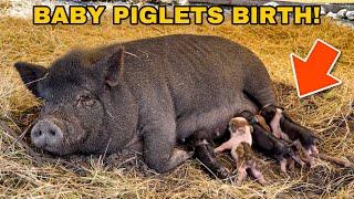 My PET PIG had BABIES!!