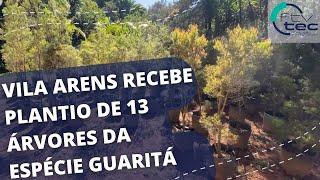 Vila Arens recebe o plantio de 13 árvores da espécie Guaritá