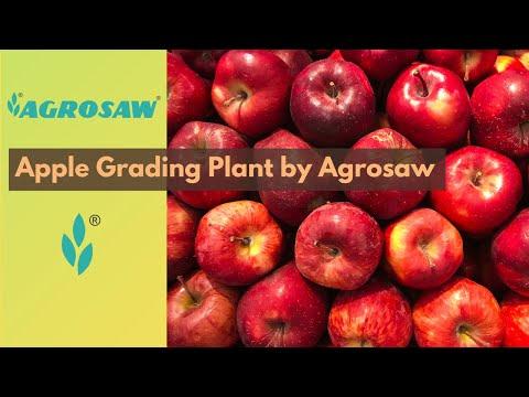 Agrosaw Apple Grading Machine