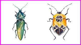 Beetle Painting Time-Lapse In Watercolor