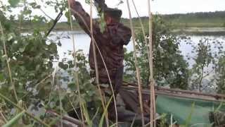 Смотреть онлайн Охота на утку из засады осенью