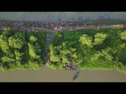 Dramatic drone footage shows Rohingya refugees entering Bangladesh