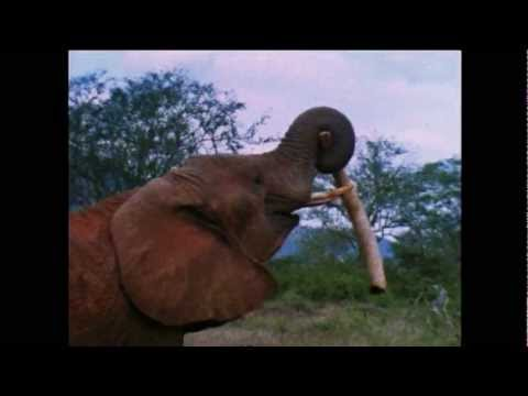 ^® Free Streaming Bloody Ivory (Home Use)