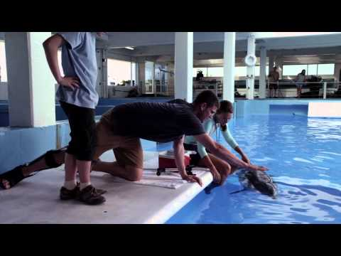 Dolphin Tale 2 (Clip 'Her Blood Work Is All Fine')