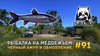Русская рыбалка 4 #91 - Рыбалка на Медвежьем. Черный амур и обновление.