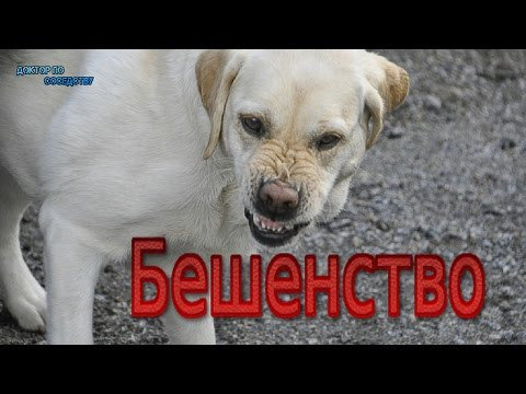 Rostov Don che cifra da alcolismo