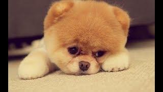SONIDO DE PERRO CHILLANDO (LLORANDO) // SOUND OF CHILLING DOG (CRYING)