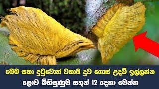 ලොව බිහිසුණුම සතුන් 12 දෙනා මෙන්න - Never Touch These 12 Animals