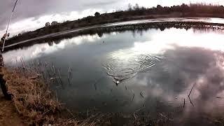 Река Волхов! Ловля сопы!