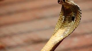Змеи — неприкасаемая красота