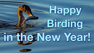 Happy Birding in the New Year from your friends at Imaging Resource!