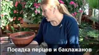"""Видео-урок """"Посадка семян перца и баклажана"""""""