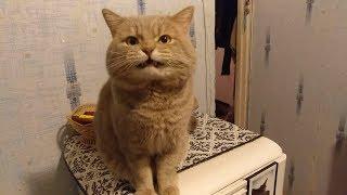 Взорвал интернет! Кот разговаривает, говорит я обиделся мама МАаа МАааа фото