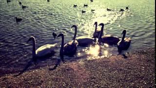 Video Marek Chyba- Peha-  spomaľ ( cover)