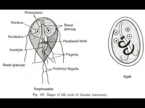Squamous papilloma back