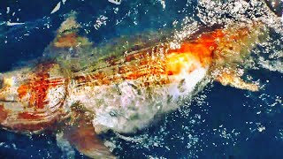 Giant fish hauled up from 1500ft deep hole in the ocean!