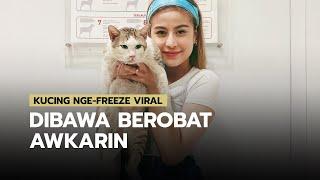 Selebgram Awkarin Membawa Kucing Nge-freeze Viral ke Klinik Hewan, Ternyata Kucing itu Sakit