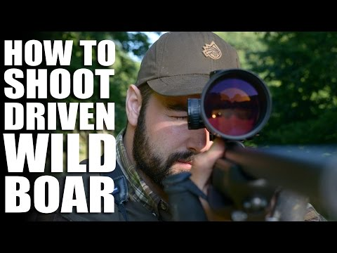 How to Shoot Driven Wild Boar