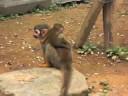 大牟田市動物園 「リスザルの赤ちゃん」
