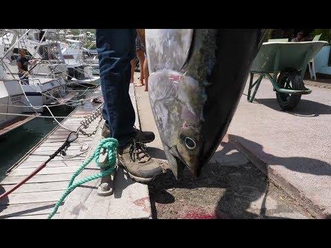 Тунец: правда ли там много ртути и полезна ли эта рыба?