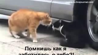Семейная разборка кота и кошки  субтитры