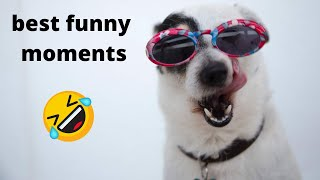 Funny Pets and Animal Compilation #2