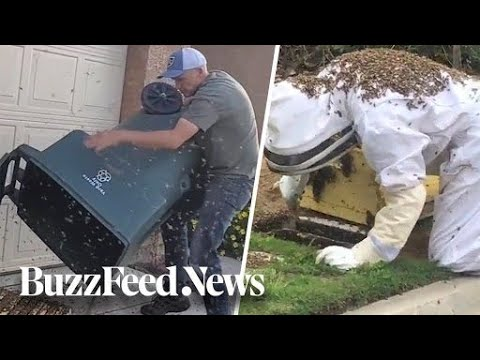 This Guy Saves Bee Swarms From Being Exterminated