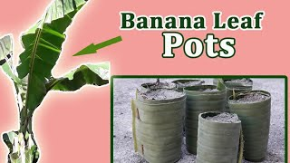 Banana Leaf Pots for vegetable seedlings Video
