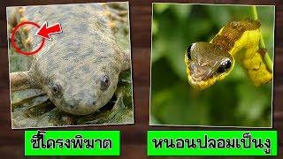 10 วิธี ป้องกันตัวของสัตว์ อันสุดแปลก ประหลาด (#2) | OKyouLIKEs