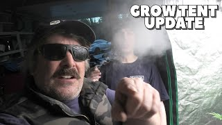 Youngblood's LED Grow Tent Update (TRIGGER WEEK) by Urban Grower
