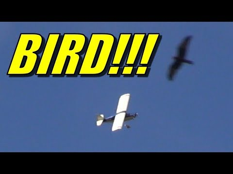 oldschool-super-decathlon-with-birds