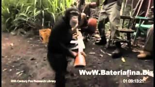 Nunca Subestimes A Un Mono 2011