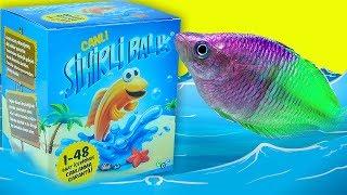 Canlanan Sihirli Balık Yumurtaları !! | Magic Fish Eggs | EvcilikTV