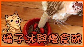 【巧克力】『橘子冰的日常』- 橘子冰與慢食碗 ฅ•ω•ฅ