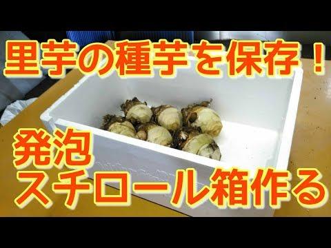 【農業#53】里芋の種芋を保存する、発泡スチロール箱の作り方【冬越し】