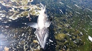 Fish Kill 2014? Yurok Youth Seek Answers